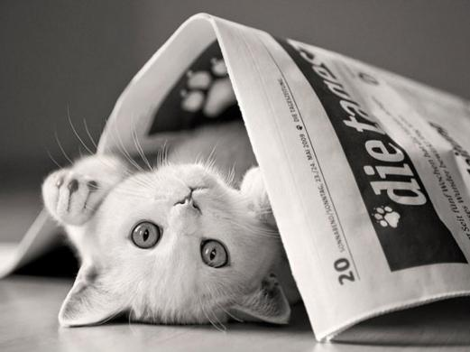 cat, game tabs, newspaper