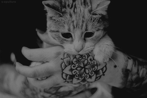 black and white, cat, tattoo