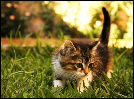 cats, exploring, garden, kitty