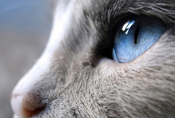 close-up, the cats eyes