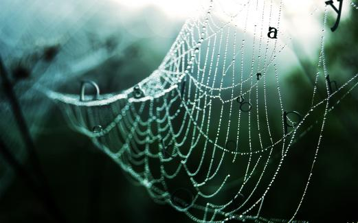 autumn, close-up, cobweb, dew