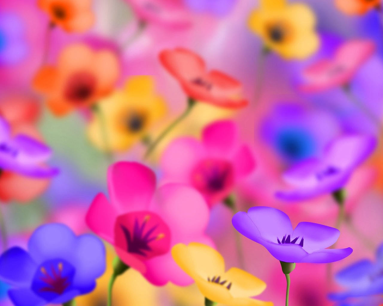 colorful, flowers, pictures