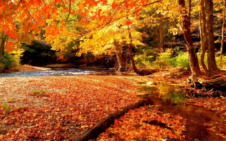 colors, creek, landscape, leaves