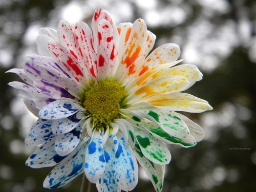 colours, rainbow, flower, paint