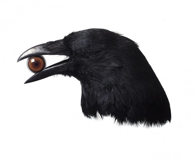 crow, creative, eye
