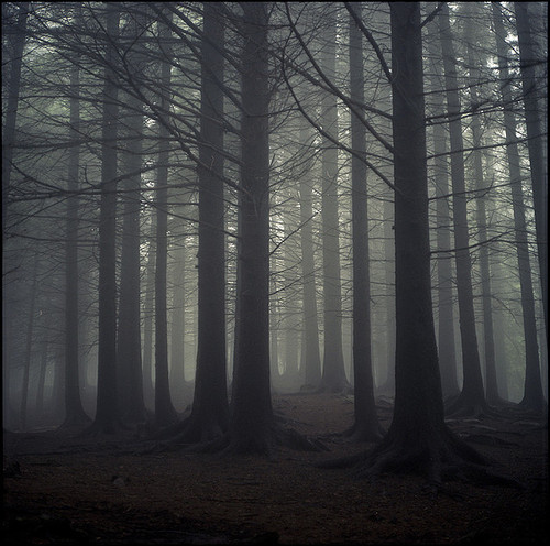 dark, forest, nature, trees, woods