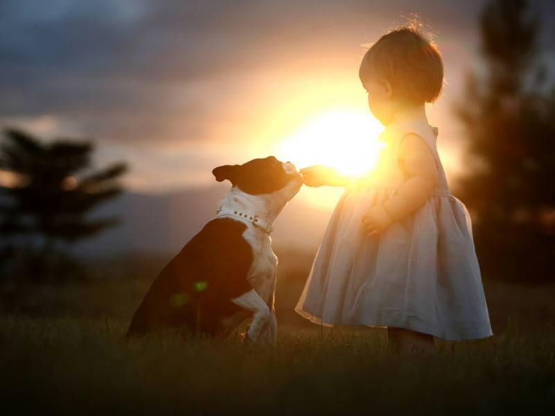 dog, friends, girl, country