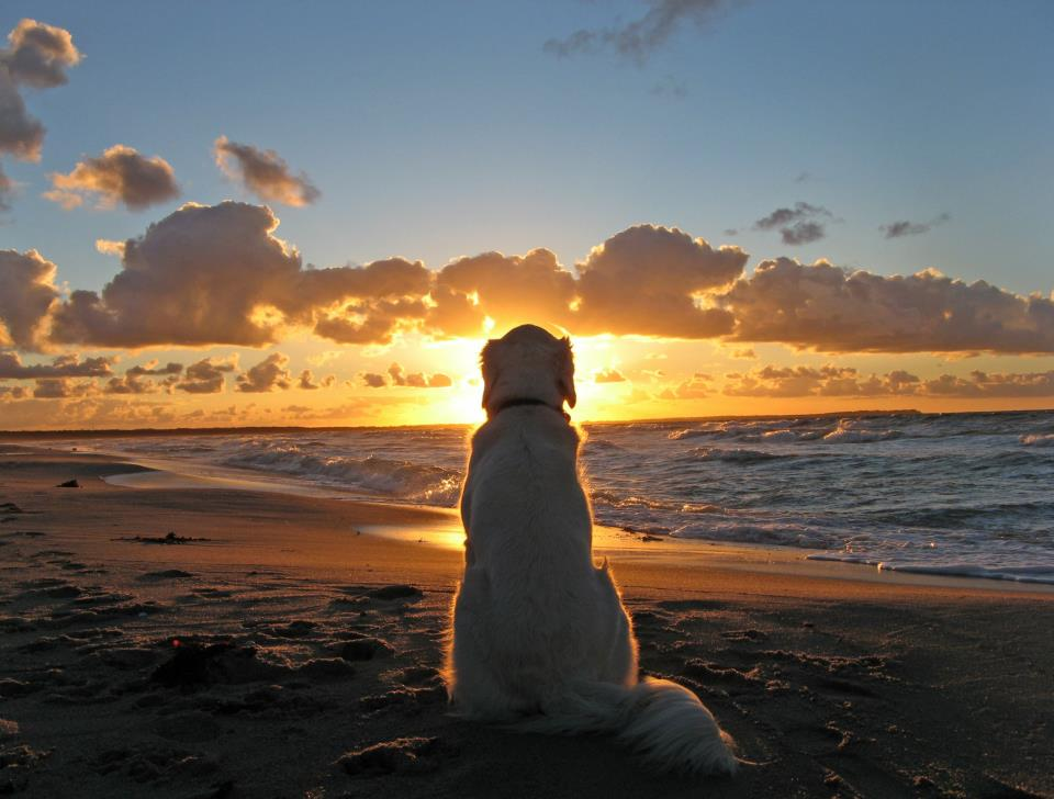dog, sunset, beach, sea, beautiful