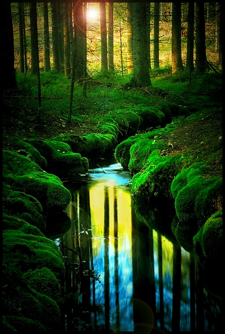 dreamworld, mature, river, forest, sunlight