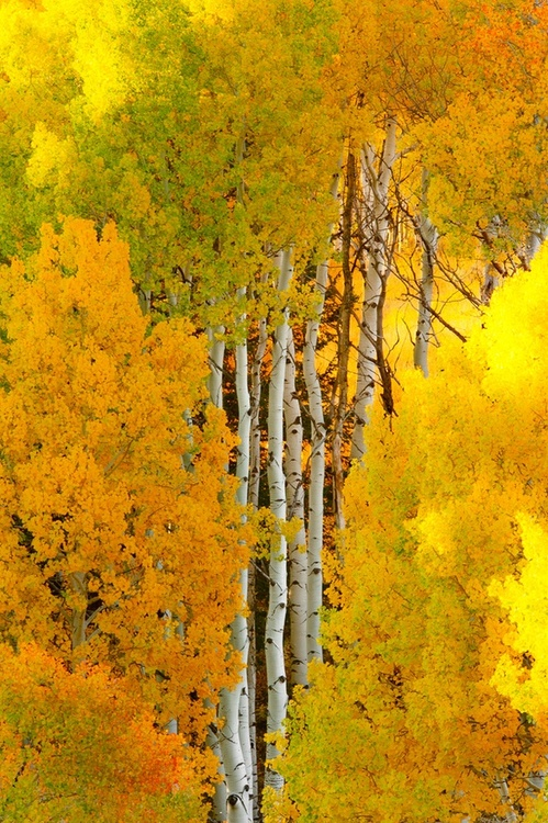 fall, autumn, color, tree, forest
