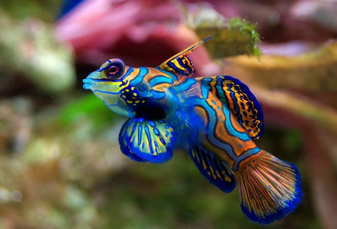 fish, rainbow colors, the aquarium