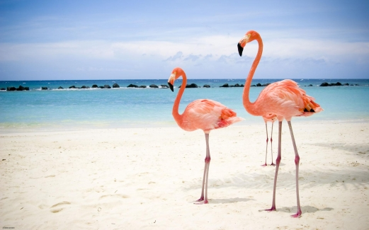 flamingo, bird, ocean, sand