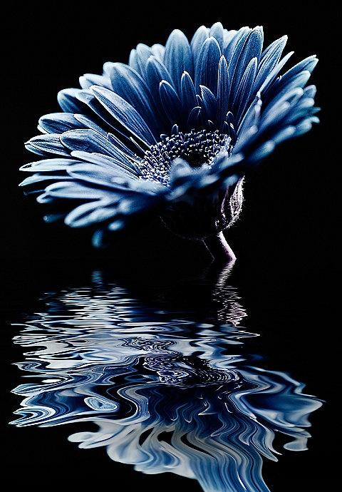 flower, nature, reflection, awesome, cool