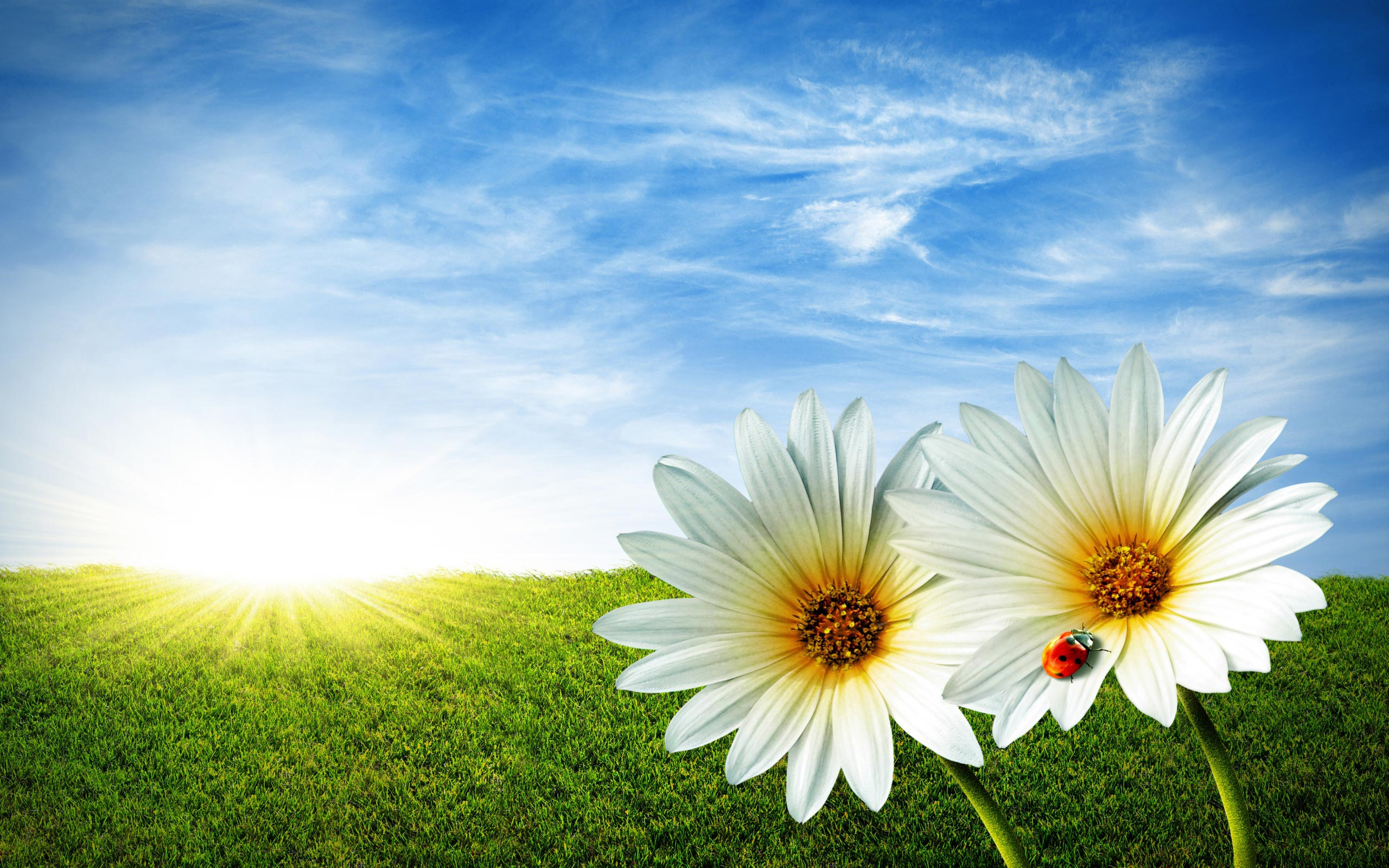 flowers, spring and sun
