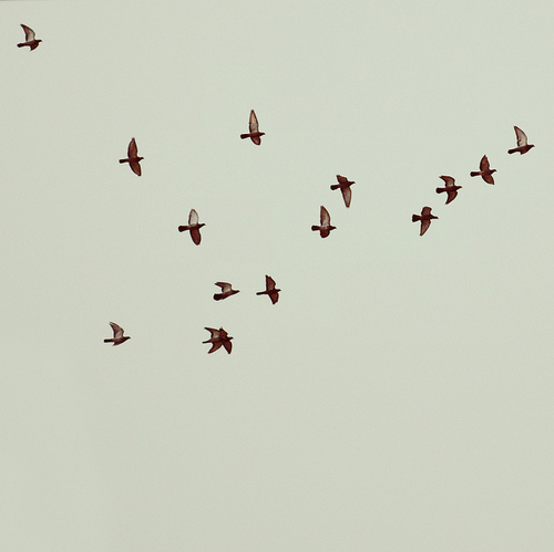 Quotes About Freedom And Birds. QuotesGram