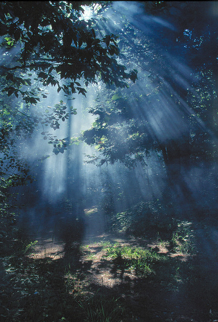 fog, forest, light, morning, trees