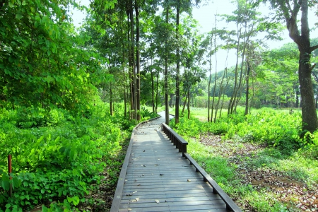 forest, trail, tree, wooden path
