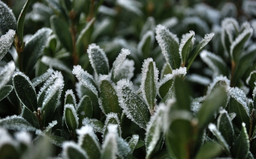 frost, close-up, green