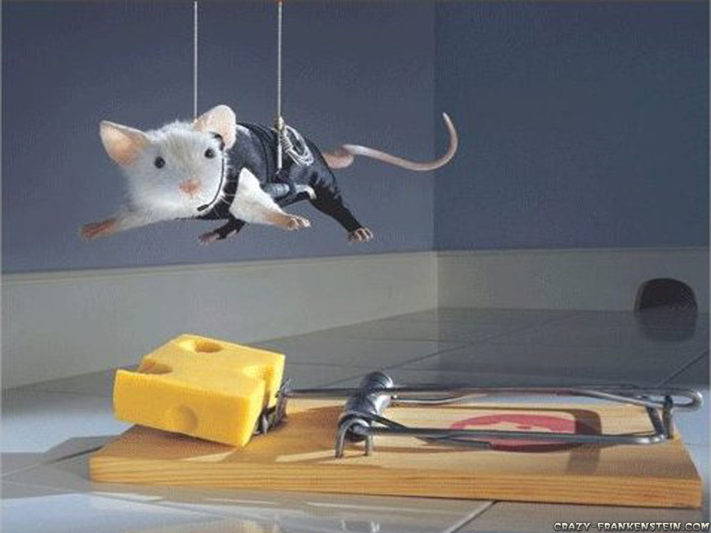 funny, animal, mouse, cheese