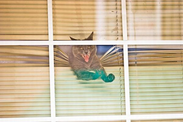 funny, animals, cat, window