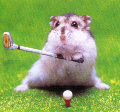 funny, animals, humster, golf