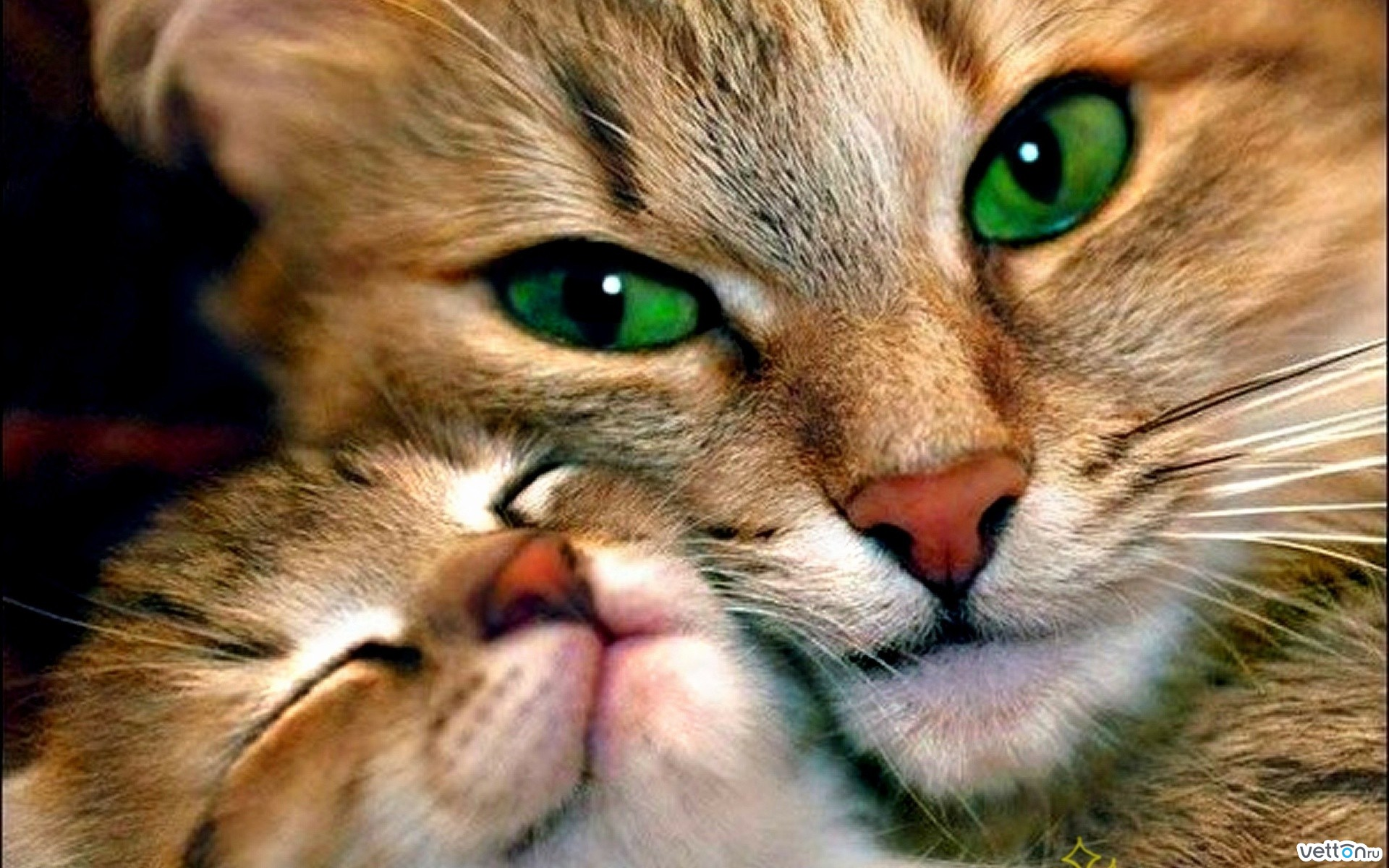 green, eyes, cats
