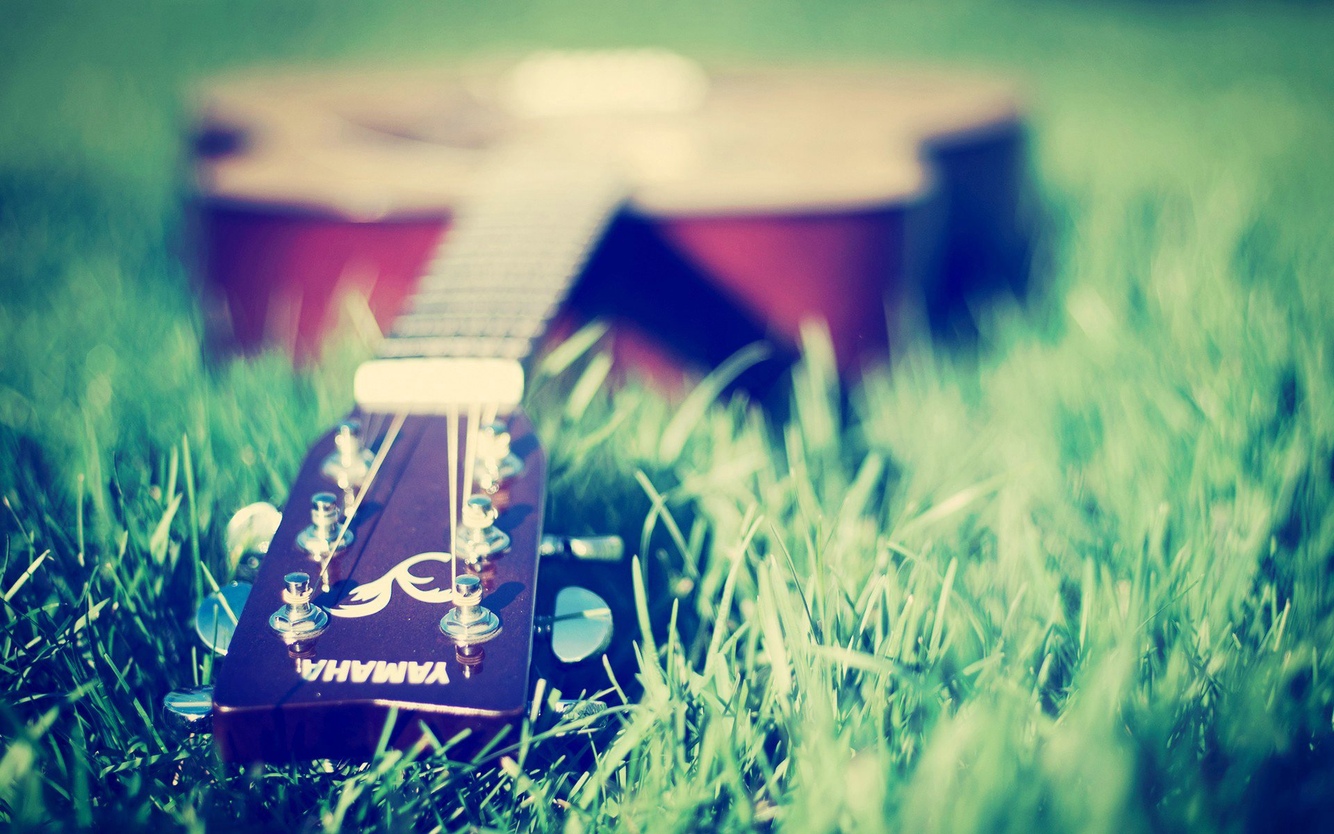 guitar, grass, macro, green