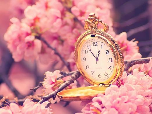 hours, branch, flower, pink