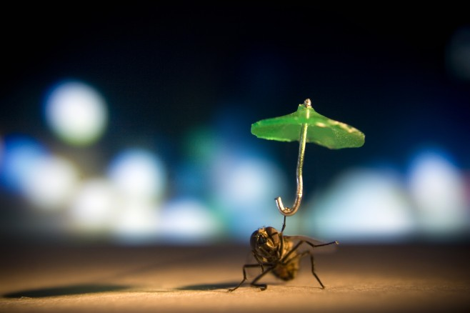 insect and umbrellas