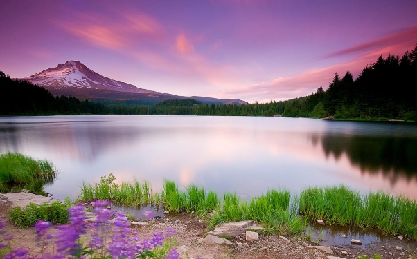 flowers, forest, lake, landscape, mountains, plants, sunset