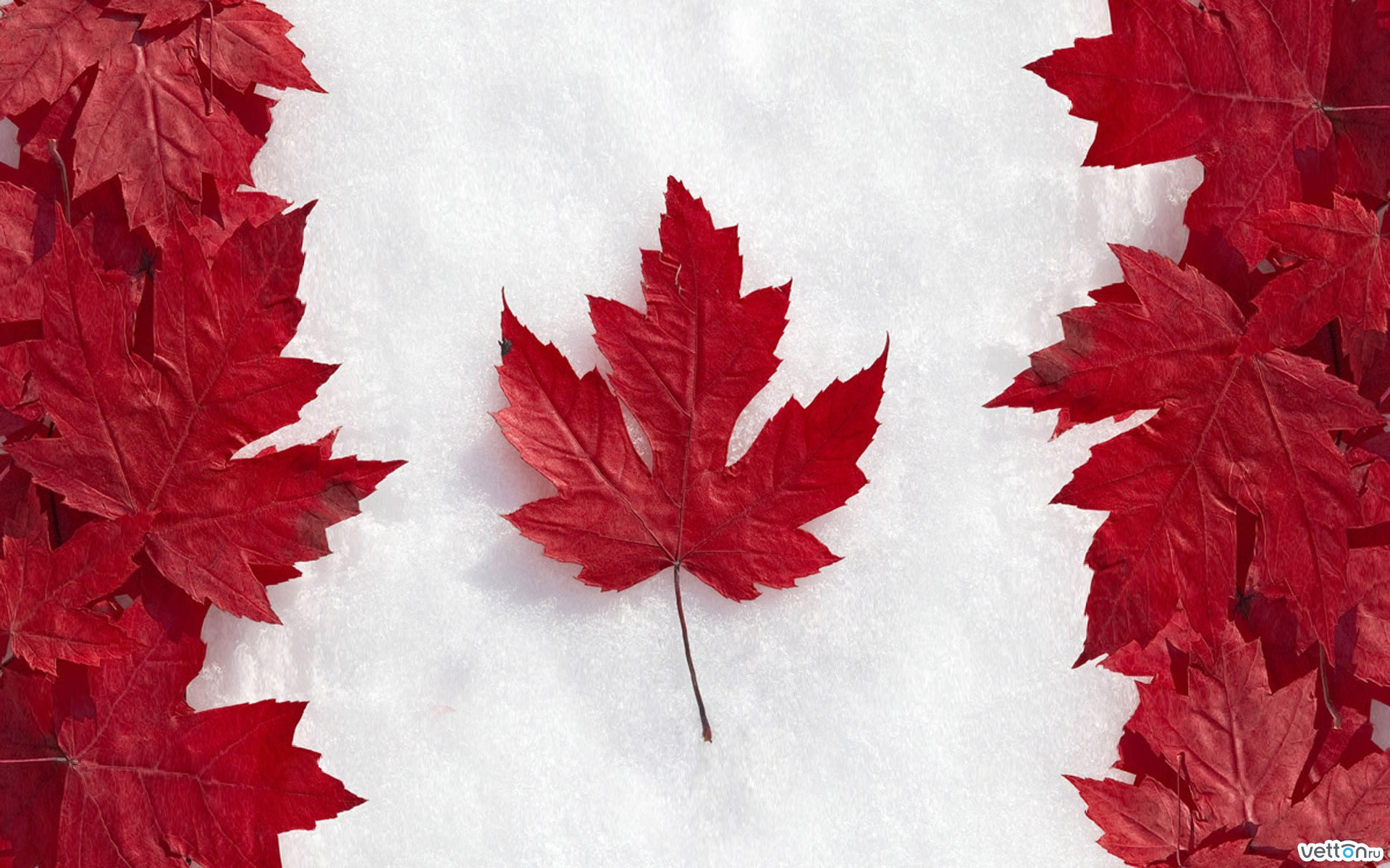 leaves, snow, flag, maple, canada