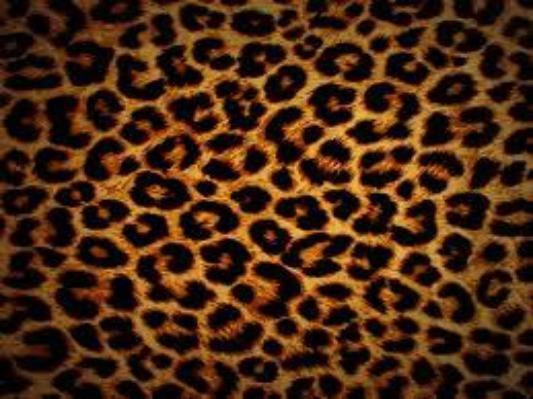 leopard, love