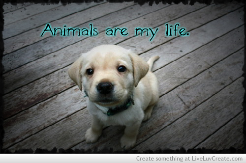 Funny Quotes About Animal Lovers : love-animals-love-quotes-quote-Favim.com-555008.jpg