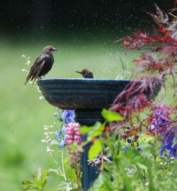 bath, bird, nature