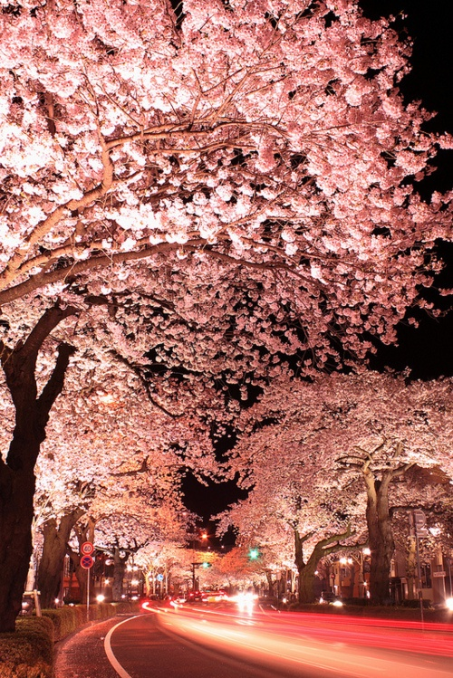 nature, color, pink, tree, flowers