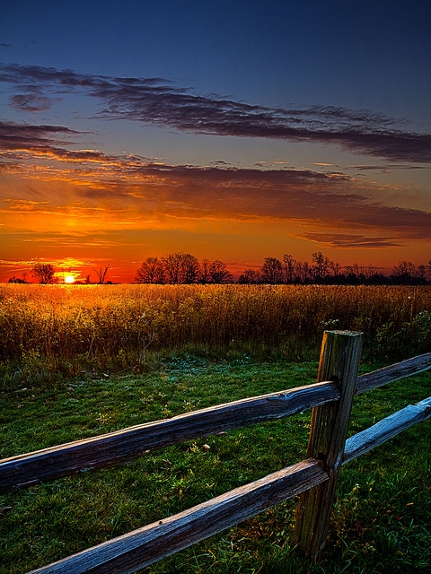 nature, countre, field, sunset