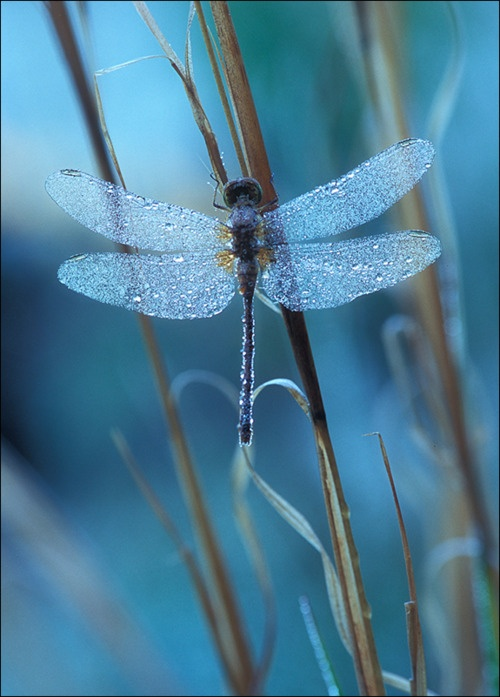 nature, delicate, beautiful, wings, photography