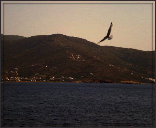 nature, sea, island, seagull, birds