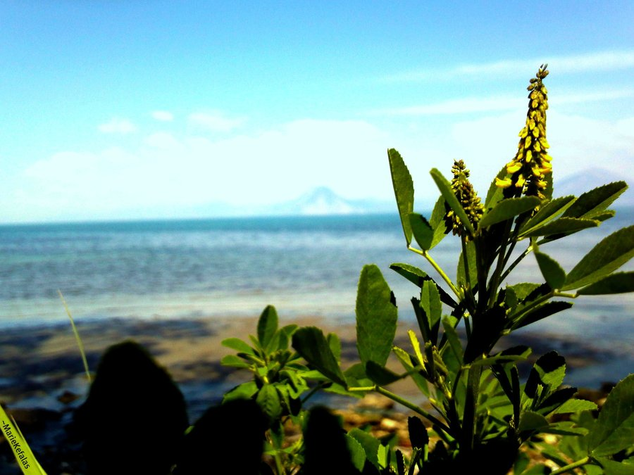 nature, sea, plants, landascepe, sky