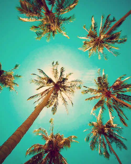 palm, palms, summer, holiday, sun