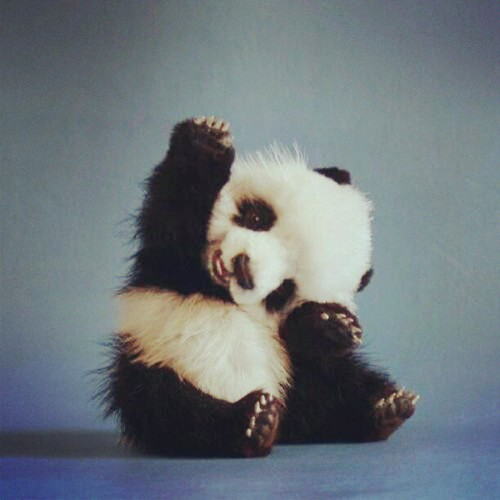 Panda  Baby  Animal  Adorable  Cute