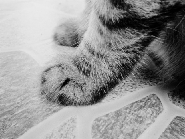 paws, cat, fur