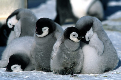 penguines, cute