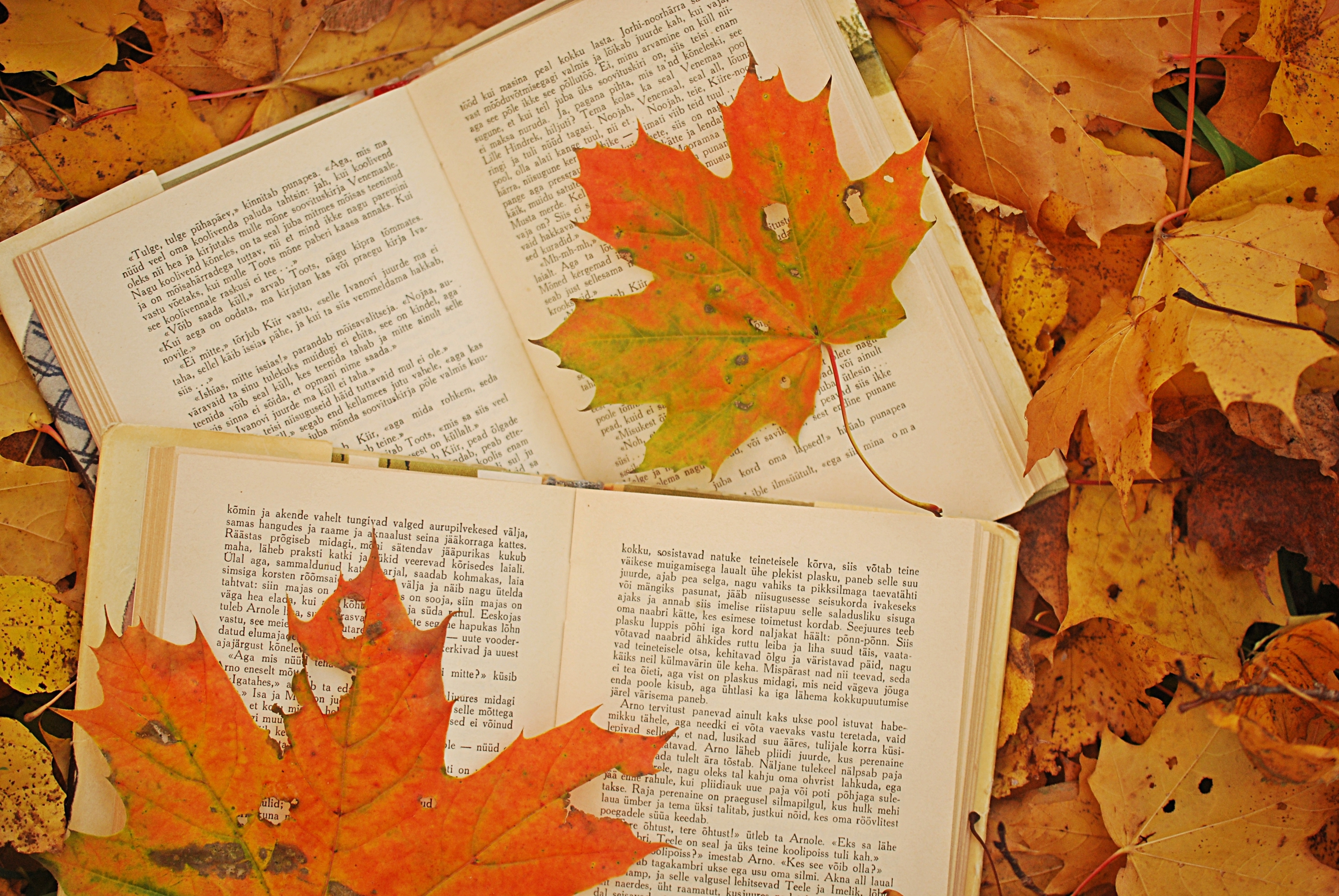 photo, autumn, leaves, maple, books