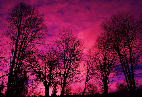 photography, colours, pink