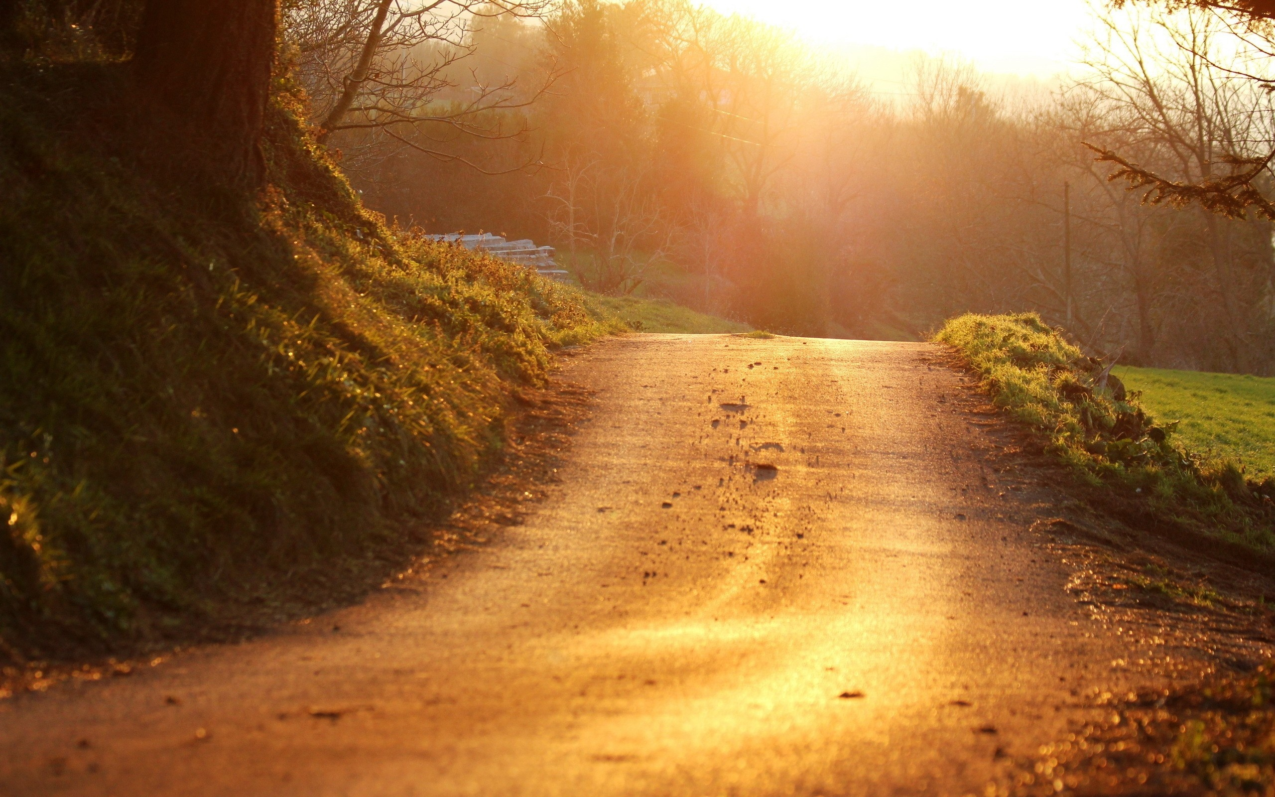 road, sun, light
