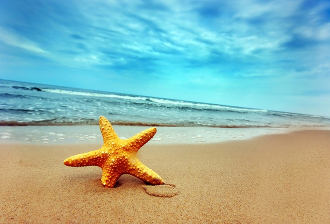 sea, starfish, vacation