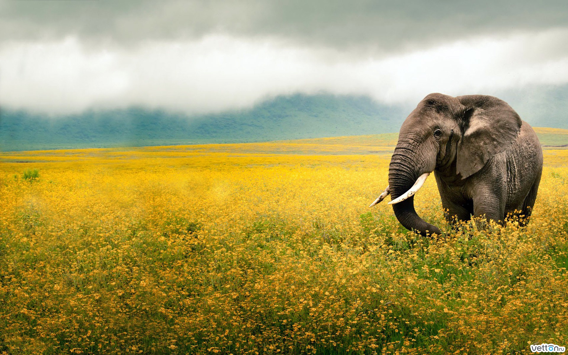 sky, field, flowers, yellow elephant