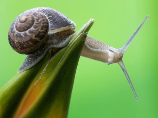 close-up, green, snail