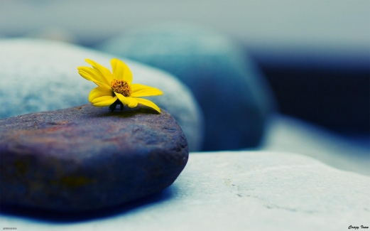 stone, flower, yellow, gray